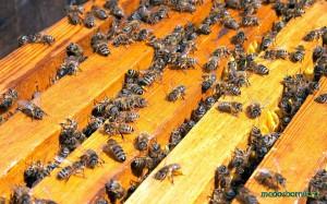 сборка пчелиного гнезда на зиму